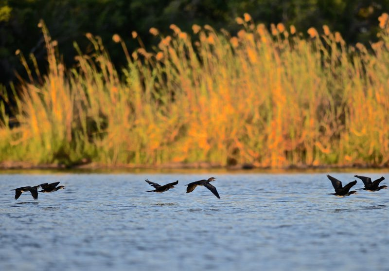 Bespoke Safaris in Lower Zambezi National Park, Zambia - Journeys by Design