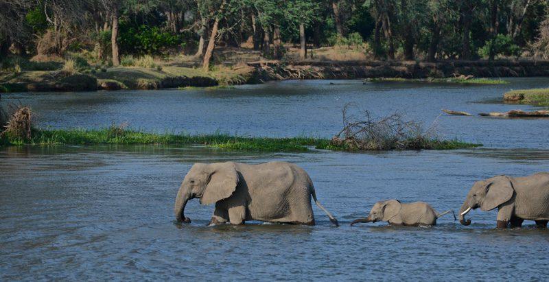 The Lower Zambezi National Park in Zambia   Audley Travel